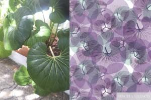 pv_hojas